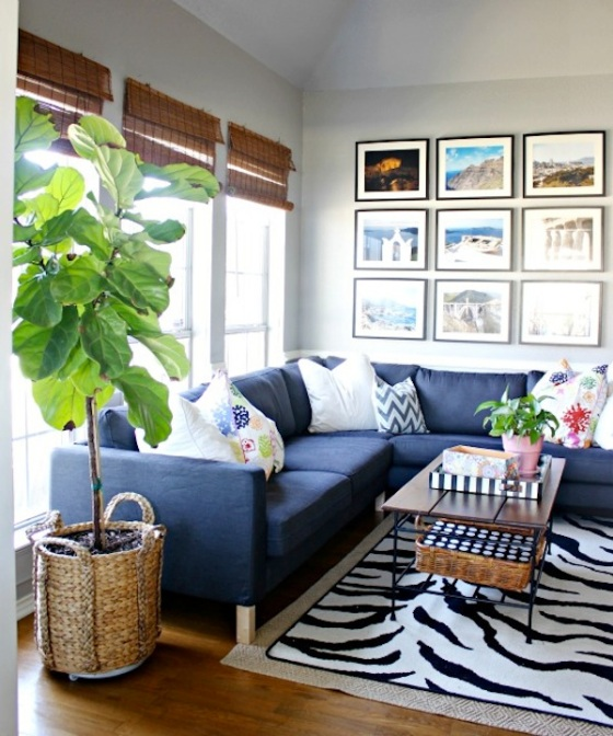 fiddle leaf fig tree 3