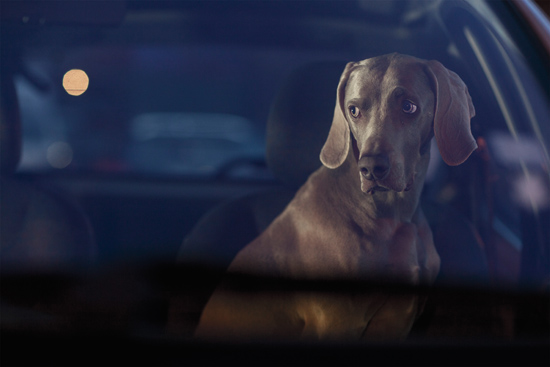 Silence of Dogs in Cars 2